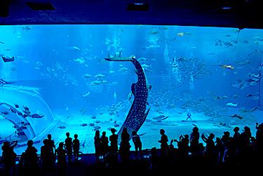 沖縄美ら海水族館(海洋博公園内)